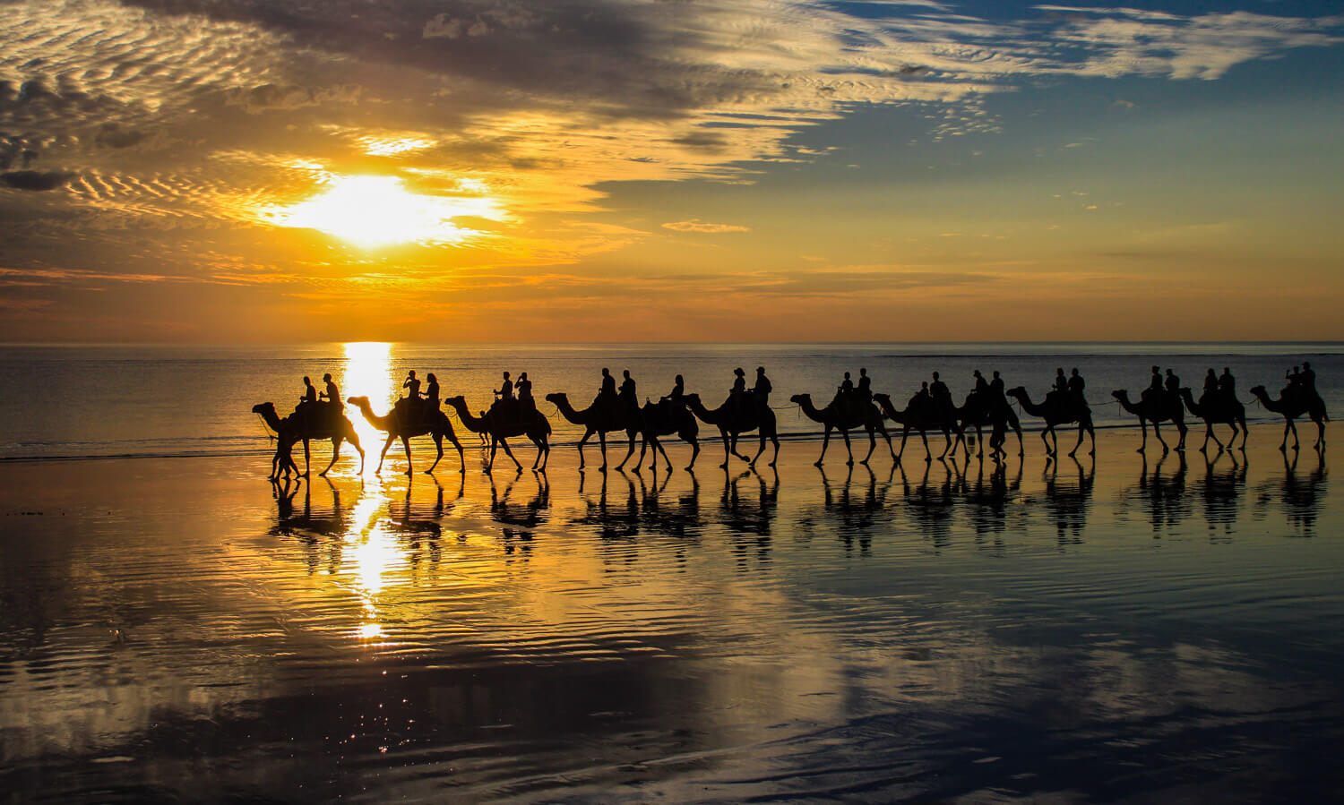 Camels in Broome Header Home