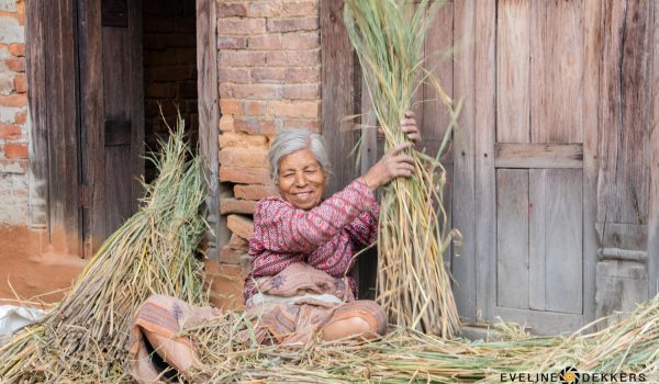 Nepalese Woman Collecting Grass – Nepal