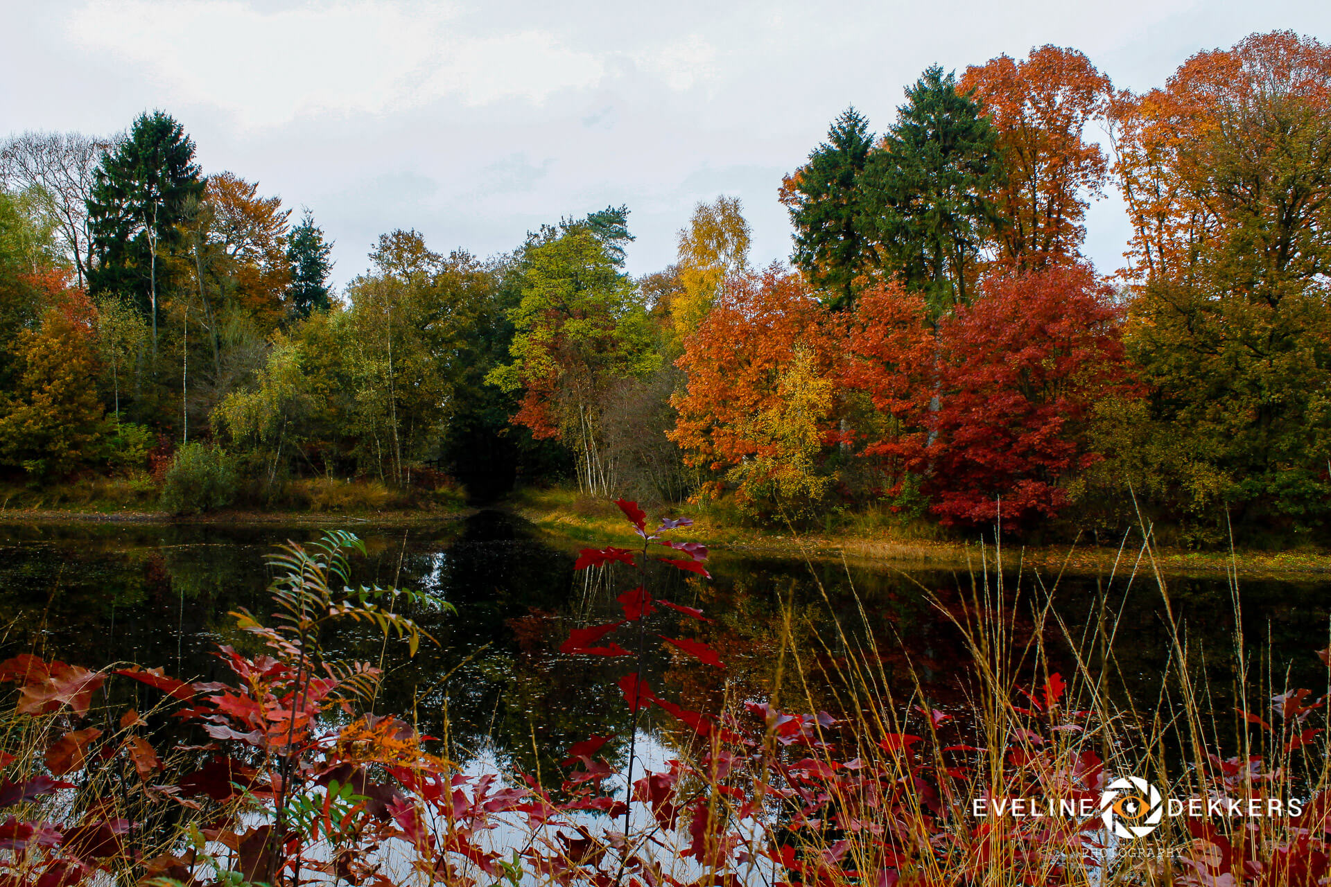 autumn-colours