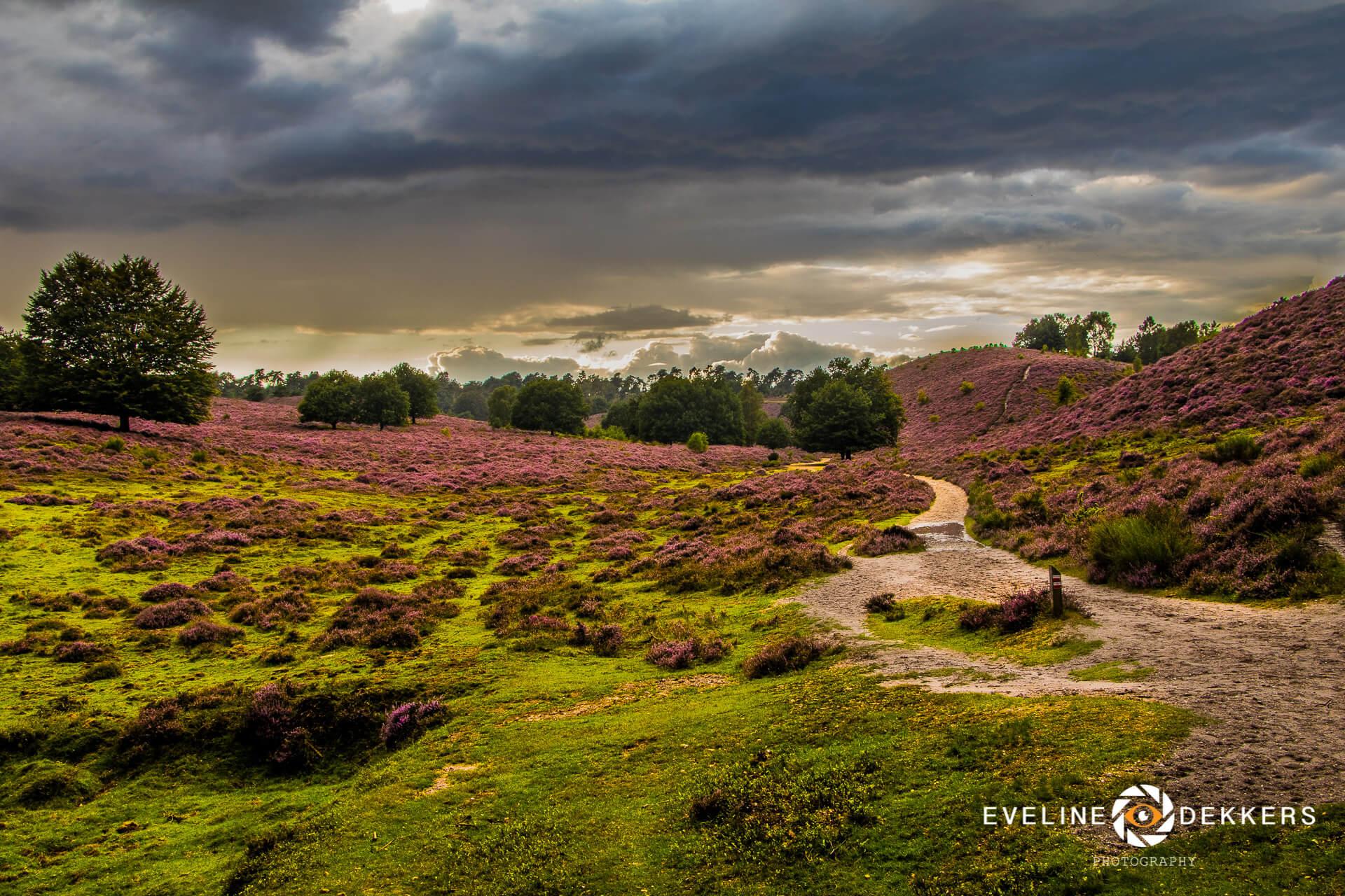 landscape-heath