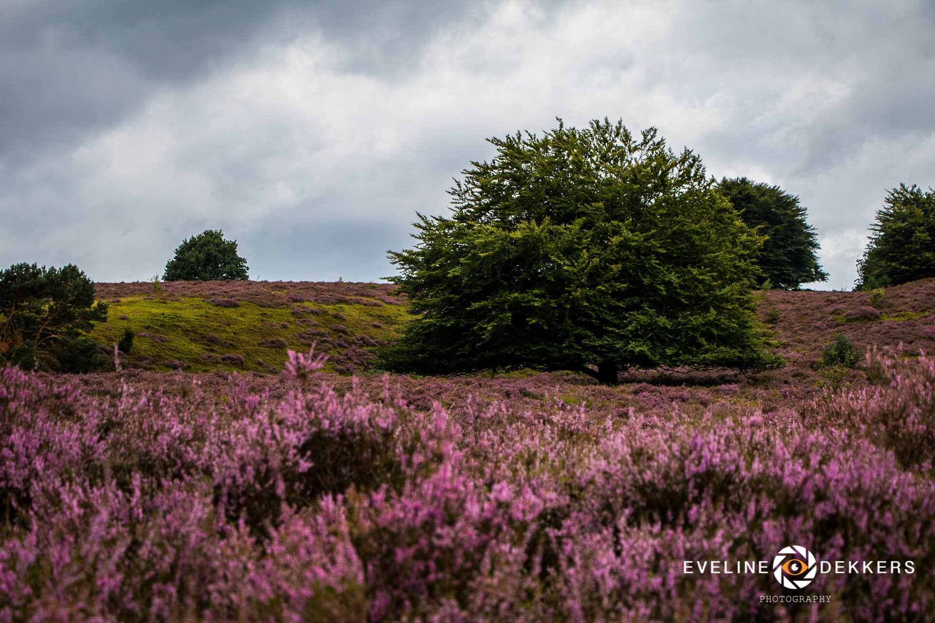 purple-heath-posbank